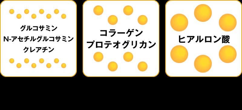 グルコサミン・N-アセチルグルコサミン・クレアチン→低分子(分子量250以下)約20分で吸収、コラーゲン・プロテオグリカン→高分子(分子量10万〜100万)吸収されにくい、ヒアルロン酸→超高分子(分子量100万以上)非常に吸収されにくい